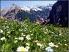 Blumenwiese bei Innerböden