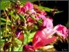 Blumen mit Biene