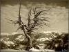 Baum am Penken